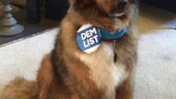 DemDaily: A Dog's Story